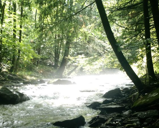 Forest Stream 1