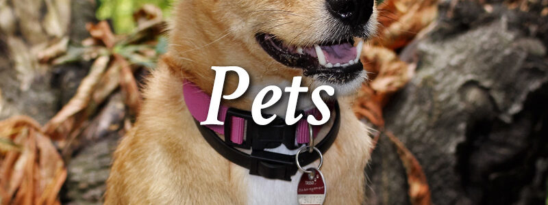 About Pets